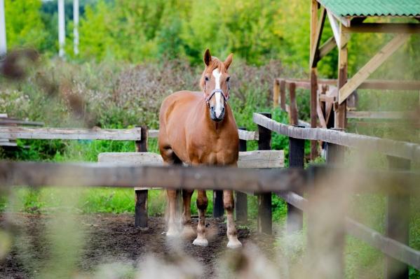 Девочка подошла к лошади сзади