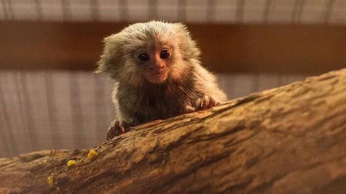В Ростовском зоопарке с начала июня родилось девять животных