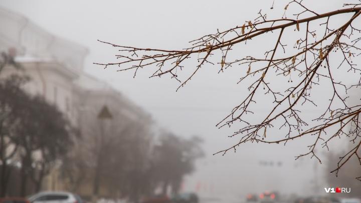 «Дождь со снегом и плюсовая температура»: туман и гололедица не покидают Волгоградскую область