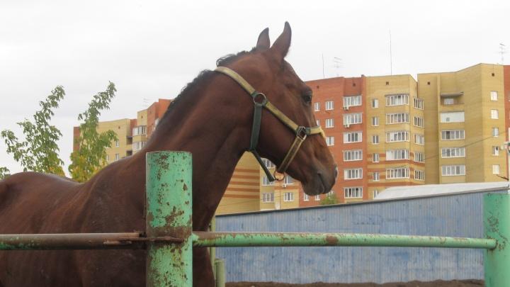 В центре Тюмени объявлен карантин из-за лошадей, подхвативших опасный вирус на городском ипподроме