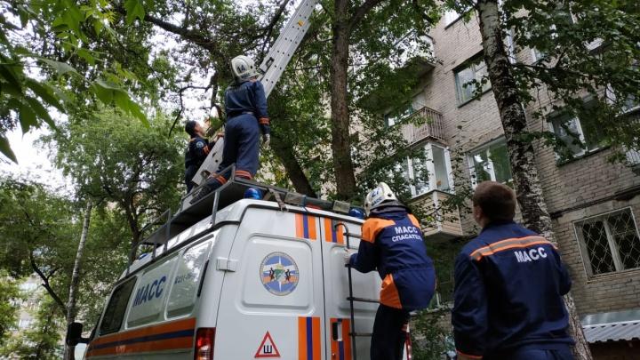 Видео: в Заельцовском районе спасатели сняли кота с высокого дерева