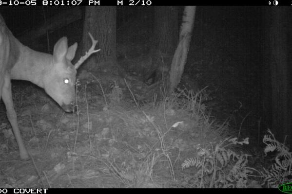 Прошлую фотоловушку украли браконьеры, а на новую удалось запечатлеть такие кадры