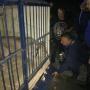 «Десять дней без еды»: в машине, припаркованной в челябинском дворе, нашли льва и двух питонов