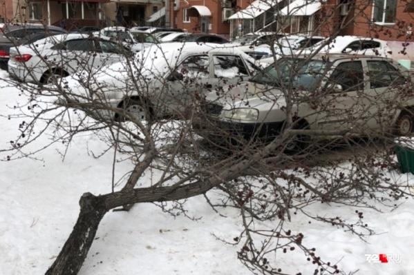 Спиленные деревья утащили с дороги и побросали в ближайших дворах