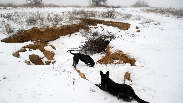 В Волгоградской области за год бездомные собаки атаковали и покусали 416 человек. Люди вышли на тропу войны
