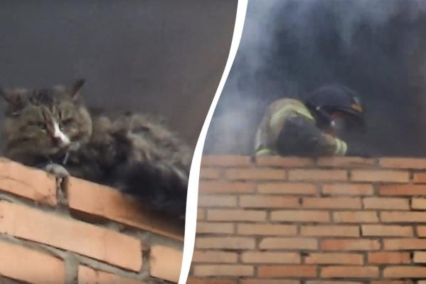 Пожарные сняли пушистика с задымлённого балкона