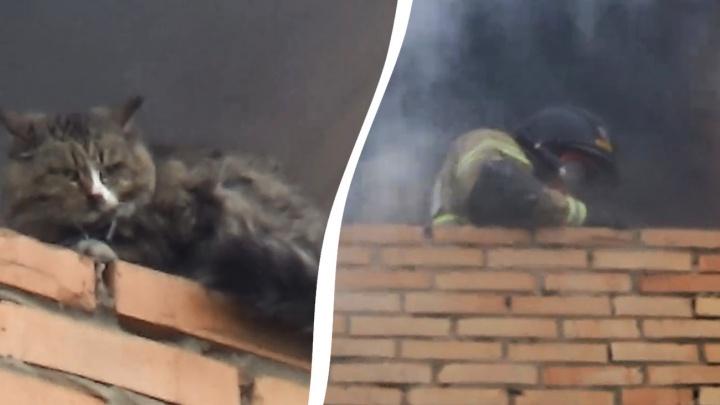 В Самарской области пожарные вынесли кошку из горящей квартиры