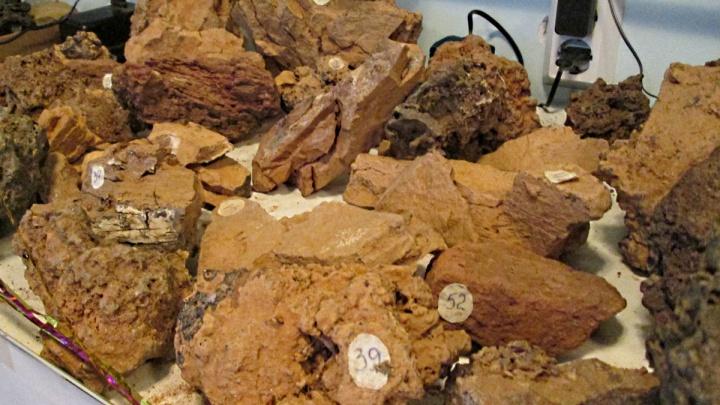 Ледяная комета, вулкан или НЛО: 110 лет ученые бьются над загадкой Тунгусского метеорита