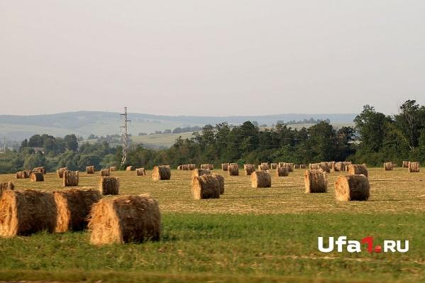 Два проекта, заинтересовавшие инвесторов, связаны с агропромышленным сектором