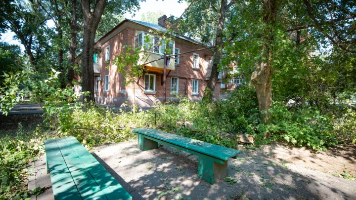 Администрация Ростова: дерево, упавшее на пенсионерок на Шолохова, не было аварийным