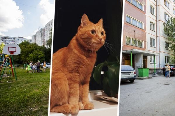 Сейчас проводится экспертиза, которая покажет, отчего умер кот Мотя