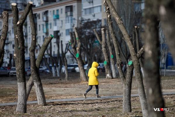 Волгоградцы сравнивают нынешнюю зиму с серединой привычной весны