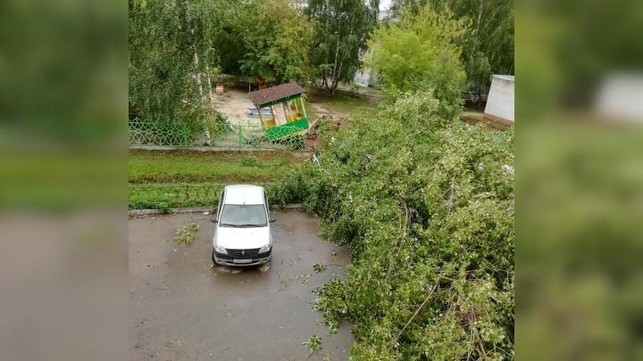 На Ставропольской десять дней не убирают упавшее во время урагана дерево