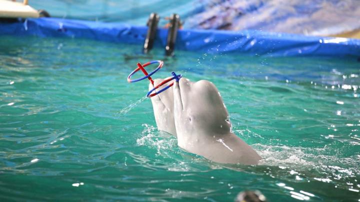 Против строительства в Уфе дельфинария собрали больше 2 тысяч «живых» подписей