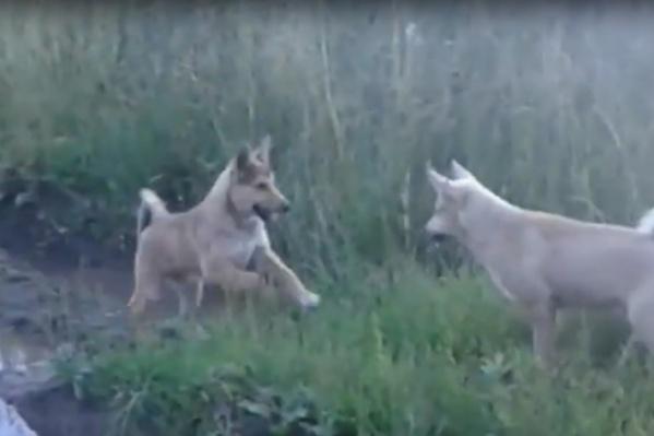 Две из четырех застреленных собак