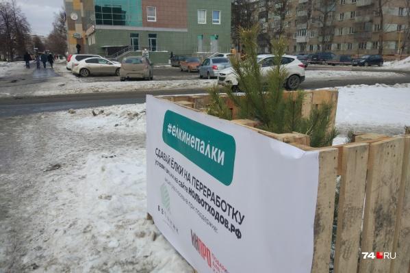 Таких пунктов приёма новогодних деревьев более 30 по всему городу. Ёлки просят оставлять за ограждением, позже их вывезут на машинах