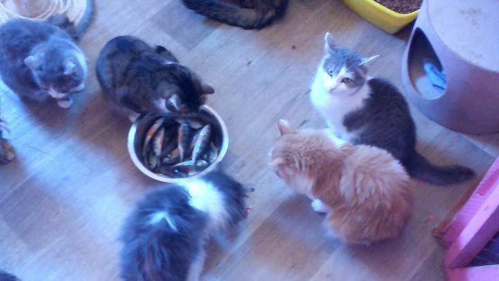 20 килограммов рыбы для котиков: новосибирские рыбаки отдали свою добычу в приют для животных
