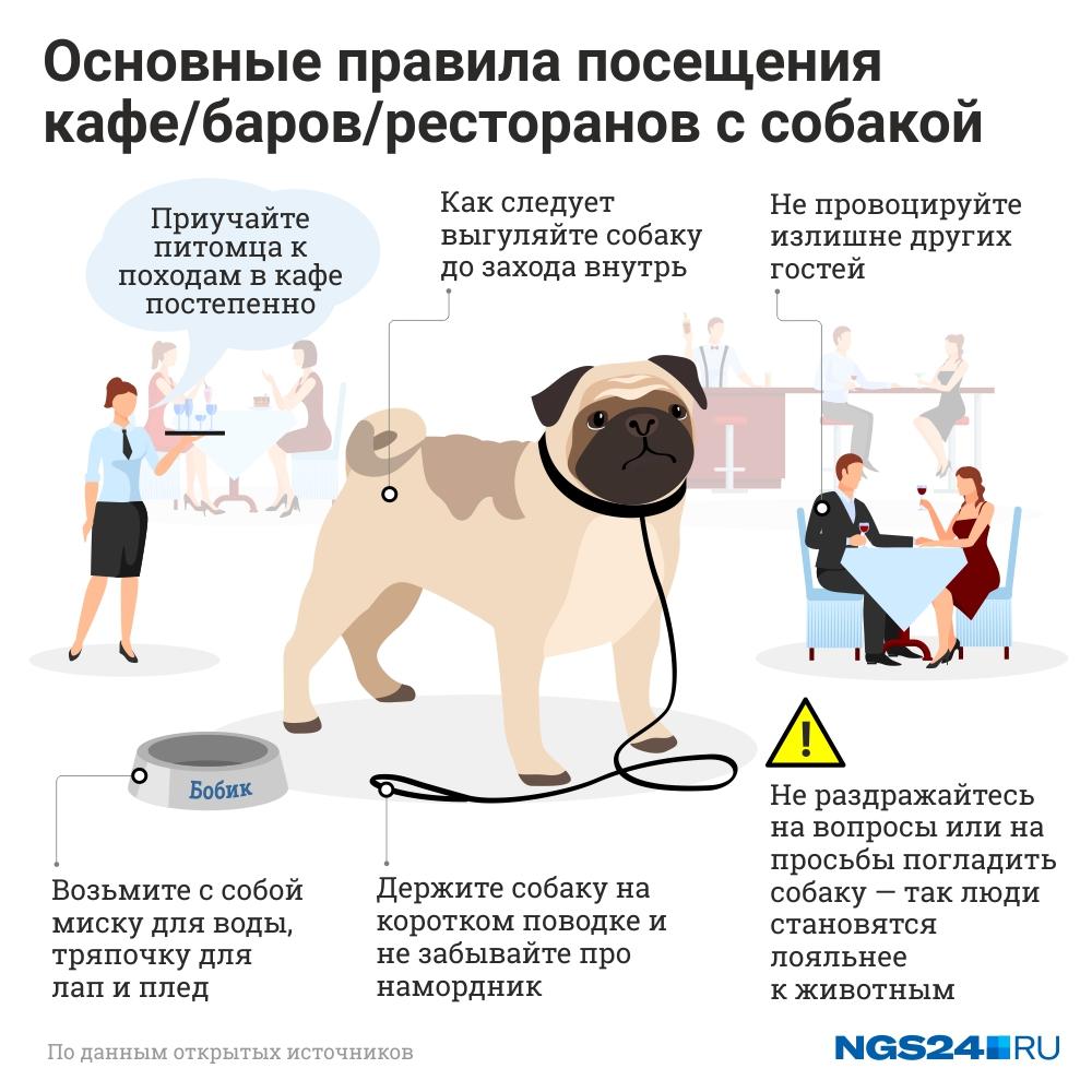 Настя разработала правила поведения собачников в общественных заведениях