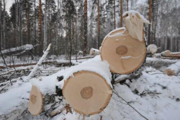 Арестовали пять человек, а вместе с ними трелевочный трактор и два лесовоза