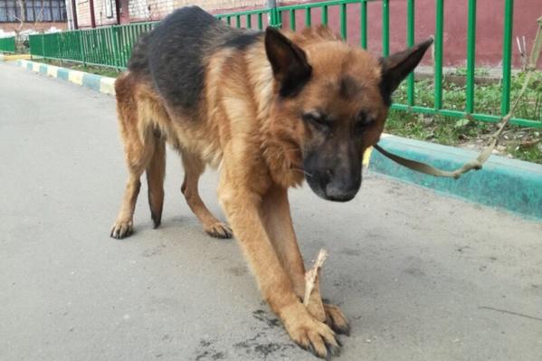Сердобольные жители пытались хоть как-то помочь собаке