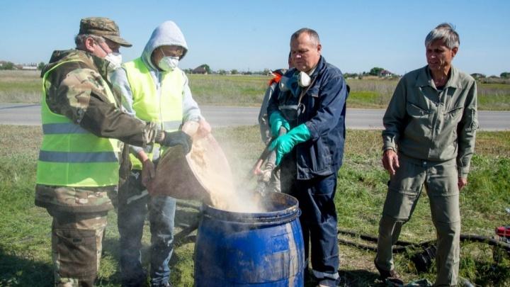 «Самый эффективный способ»: волгоградскую мошкару снова попытаются потравить к лету
