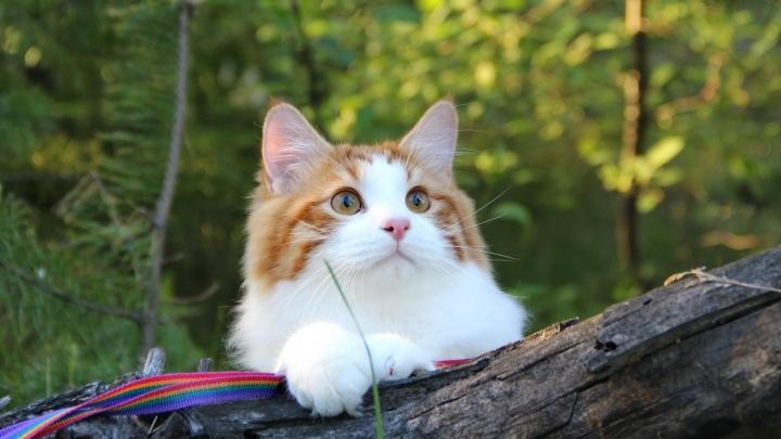 «Летний Гламуррр — 2019»: 1–2 июня в Омске пройдет сказочная выставка кошек