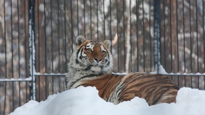 Новосибирский зоопарк начал закрываться на час позже