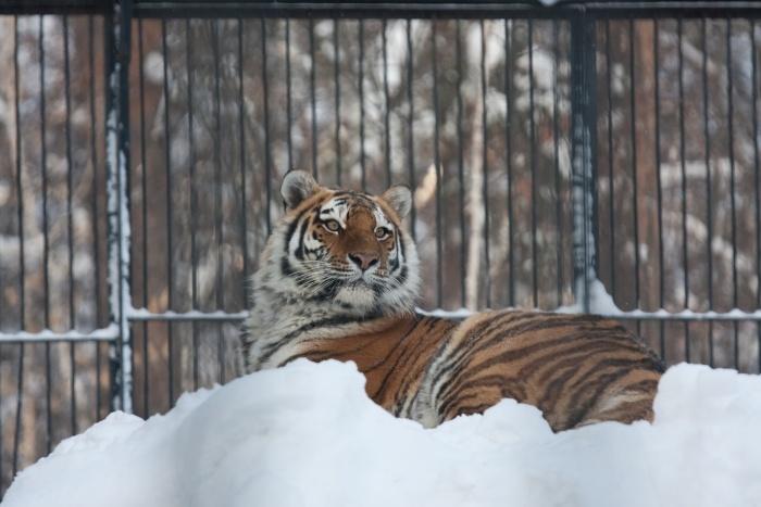 К прежнему времени работы зоопарка добавился ещё один час