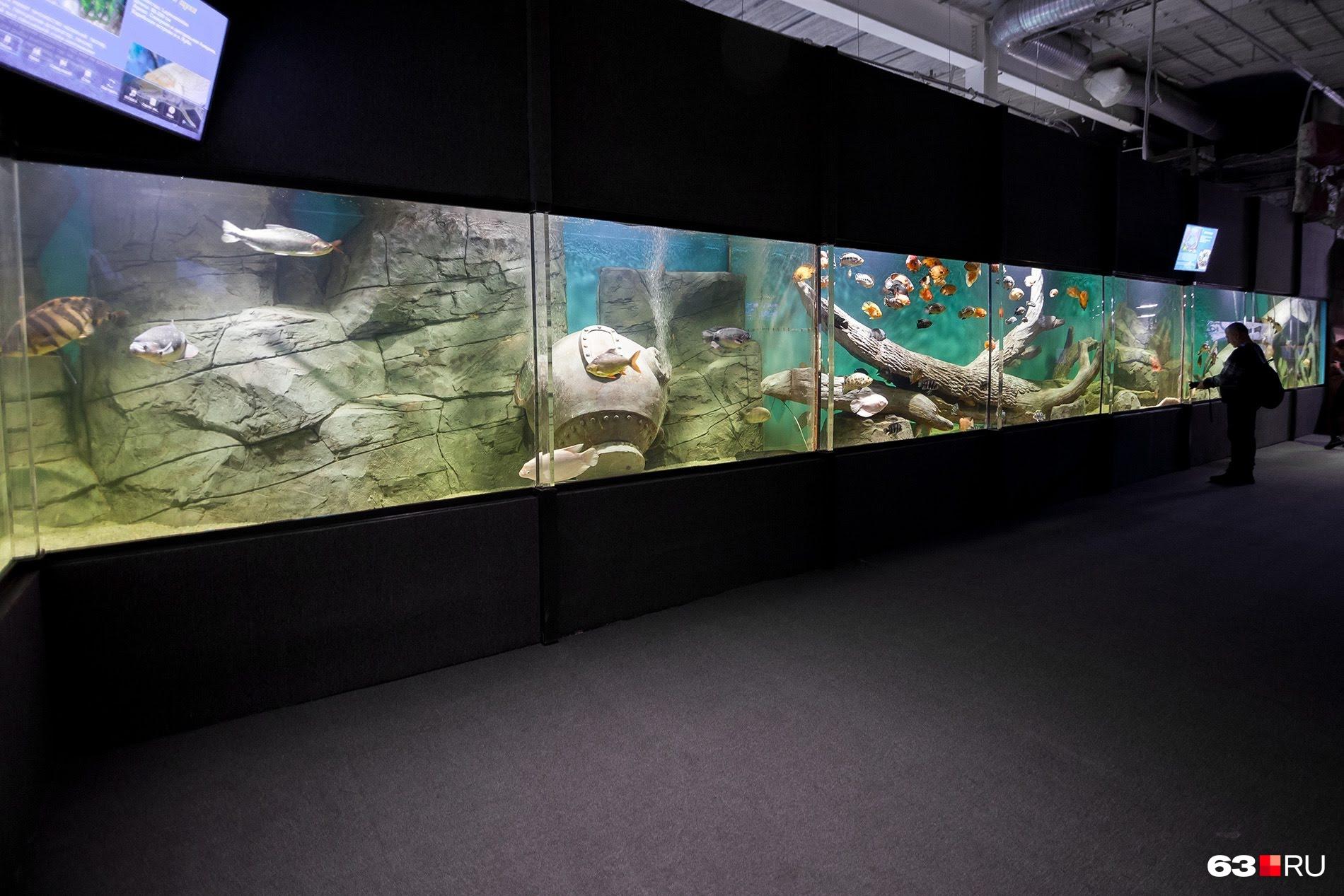 В аквариуме сымитировали дно океана