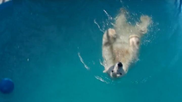 Медведи красноярского зоопарка спасаются от жары водными процедурами