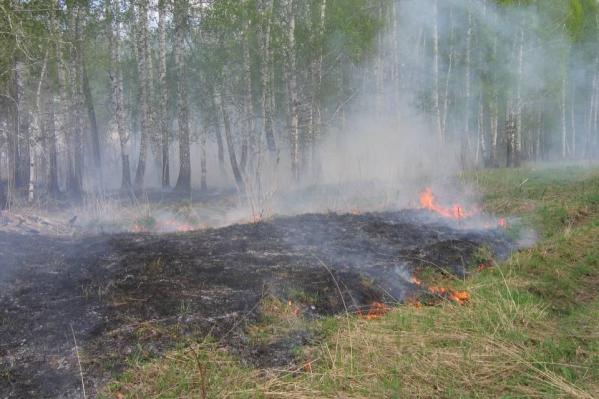 Территория леса неоднократно подвергалась вырубкам и пожарам