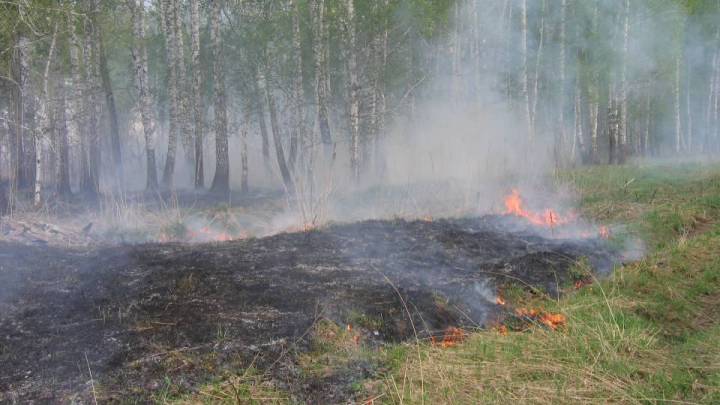 Выгоревший и вырубленный участок Караканского бора предложили сделать парком