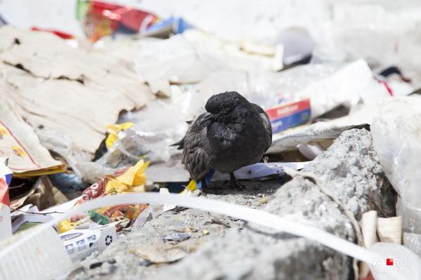 В мусоре Челябинск погряз в сентябре 2018 года