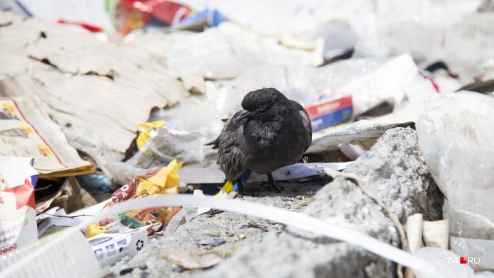 «Заявить о себе стоит»: челябинцы подали в суд на администрацию из-за мусорного коллапса