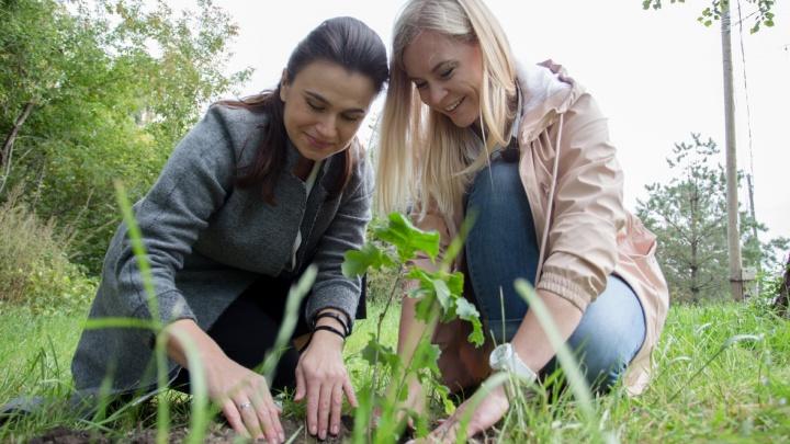«Посадили мы, сможете и вы!»: 74.ru рассказывает, как челябинцам озеленить любимый город