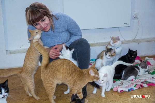 Не успевает Альбина зайти в комнату, как мурки бегут к ней — делиться своими кошачьими секретами