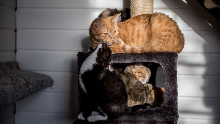 «Переживают, что кошка заболеет и умрёт»: новосибирцы стали беспокоиться из-за коронавируса у животных