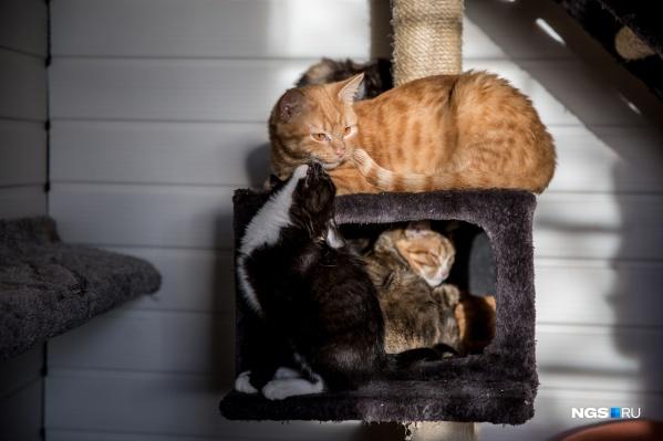 Горожане стали беспокоиться за здоровье котов— носителей коронавируса