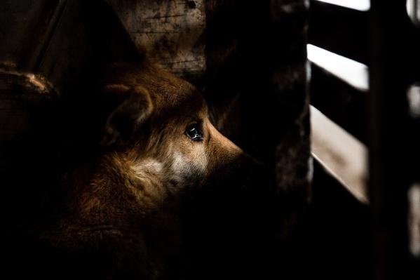 Закон о гуманном отношении к животным не могли принять восемь лет, а теперь не могут определить, как он будет работать