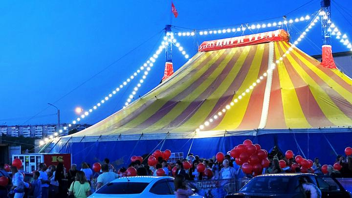 Увидеть живого льва, не заплатив ни копейки: челябинцев зовут на заключительную серию цирковых шоу
