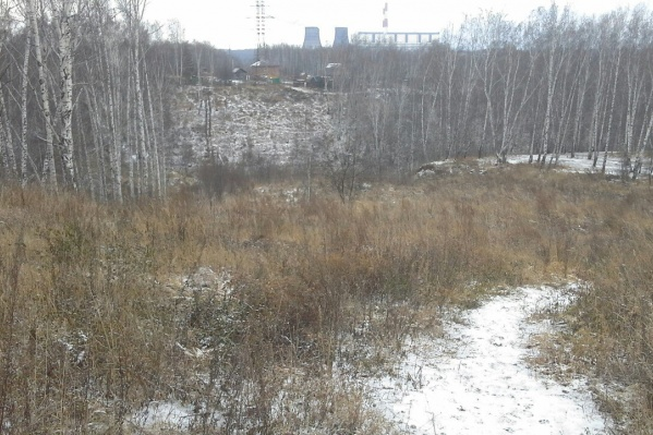 Лесополоса за домами на улице Татьяны Снежиной