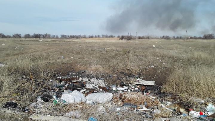 «Волго-Ахтубинской пойме грозит катастрофа!»: волгоградцы бьют тревогу о состоянии заповедной зоны