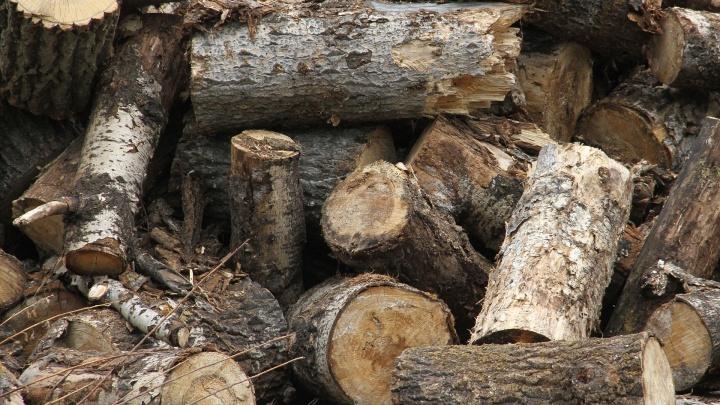 «Золотые» дрова: в Башкирии два чиновника недовезли в школы топлива на 500 тысяч рублей