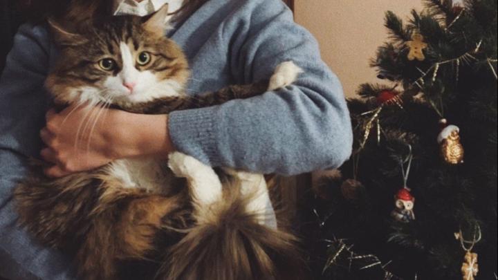 Ёлки, бенгальские огни и котики: как встречали Новый год жители Архангельска