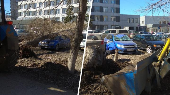 В Самаре на парковке у суда на машину рухнуло дерево
