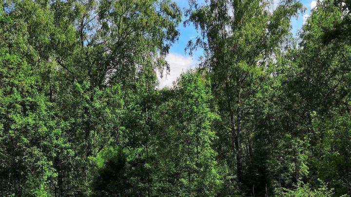Заблудившийся грибник четверо суток прожил в лесу до приезда спасателей