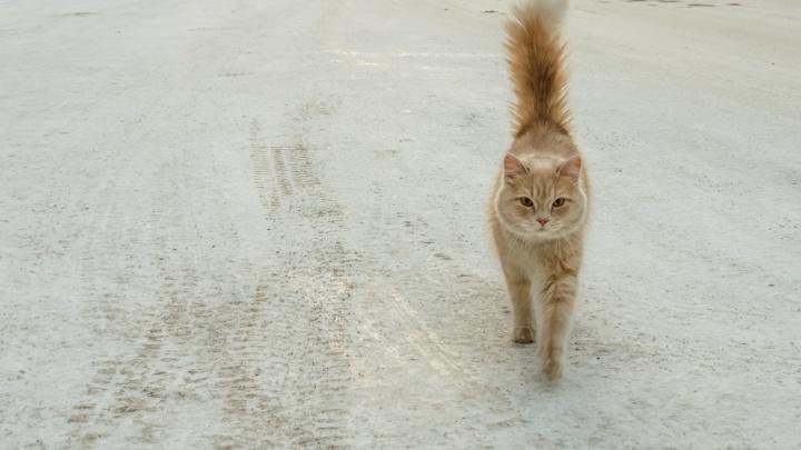 Под Новосибирском жители сняли со столба замёрзшего кота