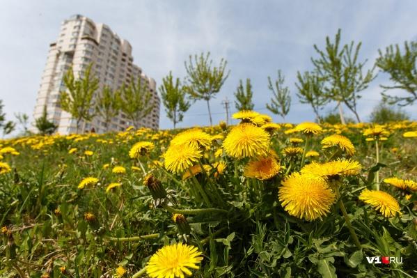 Волгоградцам, потерявшим настроение, советуют прогуляться по расцветающему городу