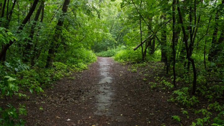 Во время поисков пропавшего грибника в лесу на Южном нашли тело