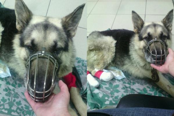 Пса назвали Максом в честь того, кто его нашёл